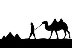 Man with camel of the pyramids. Stock Image