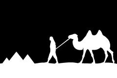 Man with camel of the pyramids. Royalty Free Stock Photo