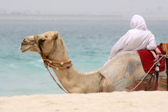 Man and camel relaxing Royalty Free Stock Photography