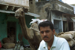 Man and camel in the streets of India Stock Photo