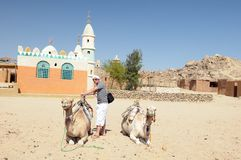 Man with camels in desert Stock Photos