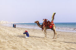 Man and camels in Karachi Royalty Free Stock Photo
