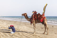 Man and camels in Karachi Royalty Free Stock Images