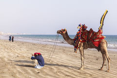 Man and camels in Karachi Stock Images