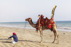 Man and camels in Karachi Stock Photography