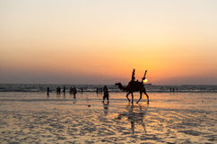 Man and camels in Karachi Stock Image