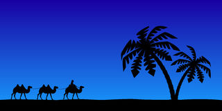 Man with camels in the night sky. Stock Photography