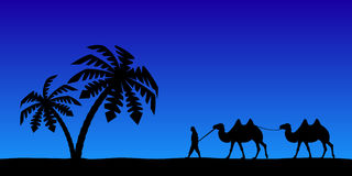 Man with camels in the night sky. Royalty Free Stock Photos