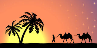 Man with camels at sunset. Royalty Free Stock Images