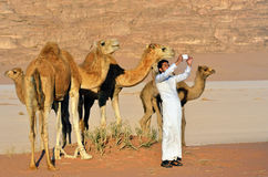Man with camels in Wadi Rum desert Stock Photography