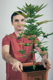 Man with Cannabis plant Stock Images