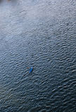 Man in Canoe. Man in a canoe crossing a lake Royalty Free Stock Photography