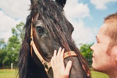 Man caress horse. Summer day on the farm. Young man caress horse Royalty Free Stock Photo
