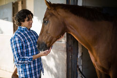 Man caressing the brown horse in the stable. Smiling man caressing the brown horse in the stable Royalty Free Stock Photography