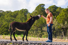 Man caressing and feed a wild donkey royalty free stock images