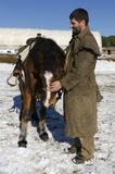 Man caressing horse in horse base. Selective focus Royalty Free Stock Image