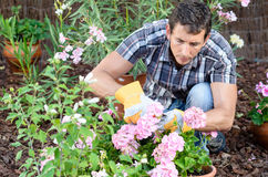 Man caring garden. Young man pruning flowers in home garden Royalty Free Stock Photography