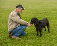 A man caring for his Border Collie. By giving it water Royalty Free Stock Images
