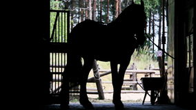 Man caring for a horse, silhouette stock footage
