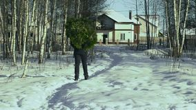 A man carries a Christmas tree home from the forest to decorate the house and prepare for the Christmas holiday. New stock video