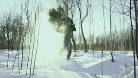 A man carries a felled tree from the forest home for the New Year holiday Christmas and New Year. Against the background. Of winter sun and frost, slow motion stock footage