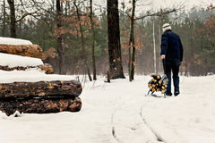 Man carries wood on a sled in the winter snowy forest Royalty Free Stock Image