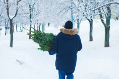 Man Carrying Christmas Tree at Park Stock Photos