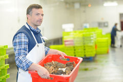 Man carrying crate crabs Stock Images