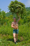 Man carrying grass 1 Royalty Free Stock Images
