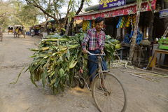 A man carrying grass by bike in Myanmar Stock Image