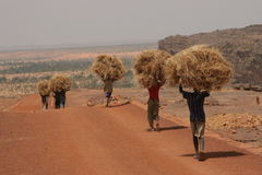 Man carrying hay in Africa Stock Photography