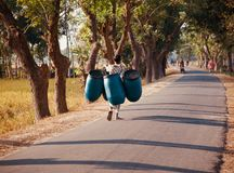 Man carrying some plastic drums in a street. Man carrying some plastic drums walking in a street unique photo stock photo