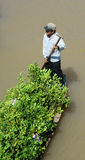A man carrying trees and flowers on boat in southern Vietnam Stock Photography