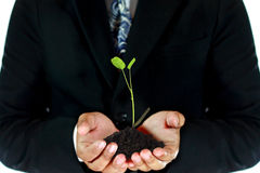 Man carrying young tree. Young tree and soil in business man's hand Stock Photography