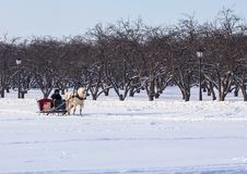 Man in the cart with white horse in winter park. Winter landscapes in Russia. Royalty Free Stock Photos