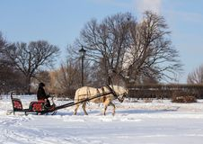 Man in the cart with white horse in winter park. Winter landscapes in Russia. Stock Image