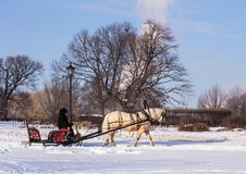 Man in the cart with white horse in winter park. Winter landscapes in Russia. Stock Photos