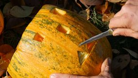 Man carves face for a halloween pumpkin. Preparing for the autumn holiday stock footage