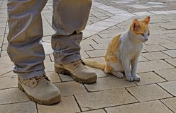 Man and cat friendship royalty free stock photography