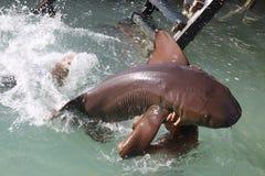 Man with cat shark Stock Photos