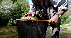 Man catching brown trout in fishing net stock footage