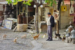 Man and cats in a village from Turkey stock image