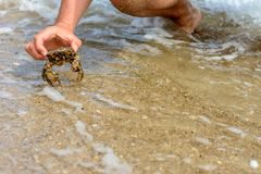 A man caught a beautiful crab in the stormy waves of the black sea. The waves wash the body of a man with a crab in his hands, a photo taken with the camera`s Stock Photo