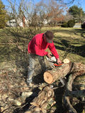 Man with a chain saw cutting up a fallen tree limb for firewood Stock Photo