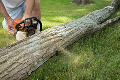 Man with chain saw cuttting fallen tree into logs. A fallen, locust tree trunk lays in the grass while a man kneeling next to it uses a gasoline powered chainsaw Royalty Free Stock Images