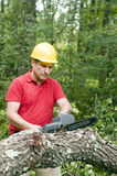 Man chain saw fallen tree. Arborist tree surgeon wearing protective hard hat helmett using chain saw to cut fallen tree Stock Images