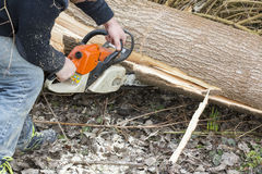 Man with chainsaw cutting the tree. Forest outdoor Stock Photo