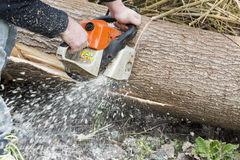 Man with chainsaw cutting the tree. Forest outdoor Royalty Free Stock Photos