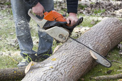 Man with chainsaw cutting the tree. Forest outdoor Stock Image