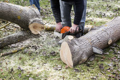 Man with chainsaw cutting the tree Stock Photos